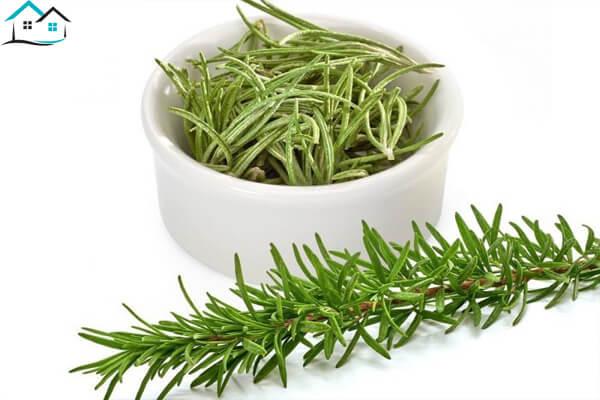 Rosemary là gì? Có công dụng gì?