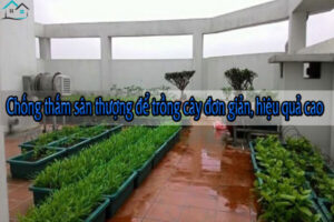 Chống thấm sân thượng để trồng cây đơn giản, hiệu quả cao